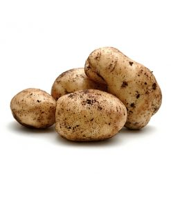Organic Dutch Cream Potatoes