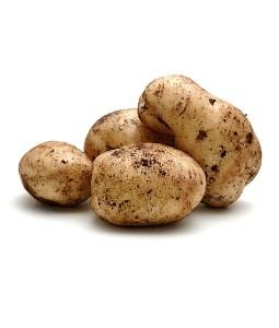 Organic Dutch Cream Potatoes